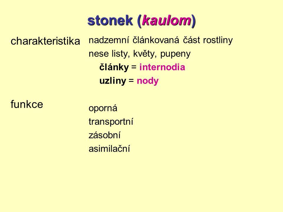 stonek (kaulom) charakteristika funkce