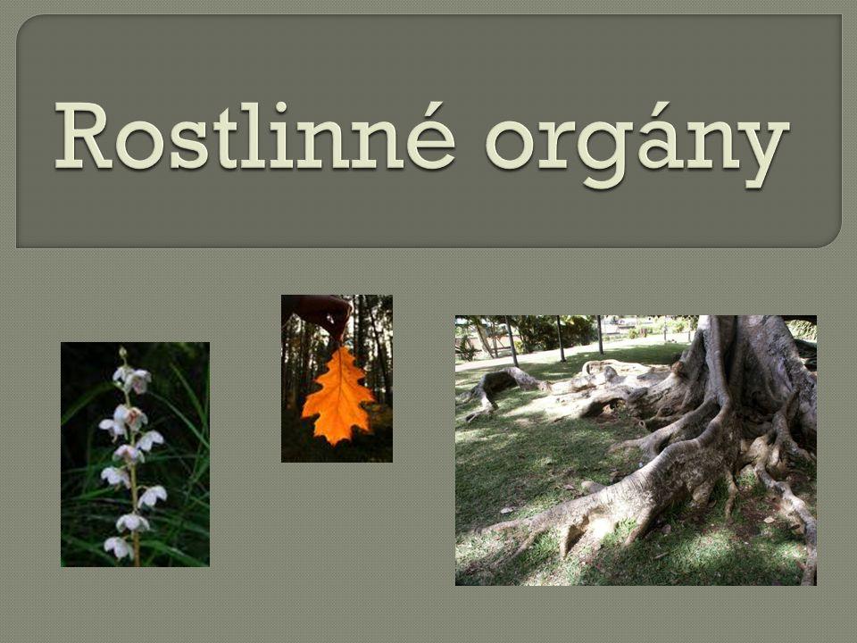 Rostlinné orgány