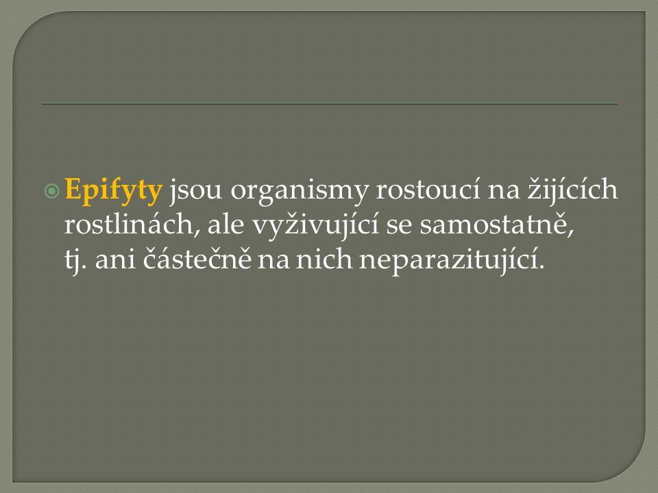 Epifyty jsou organismy rostoucí na žijících rostlinách, ale vyživující se samostatně, tj. ani částečně na nich neparazitující.