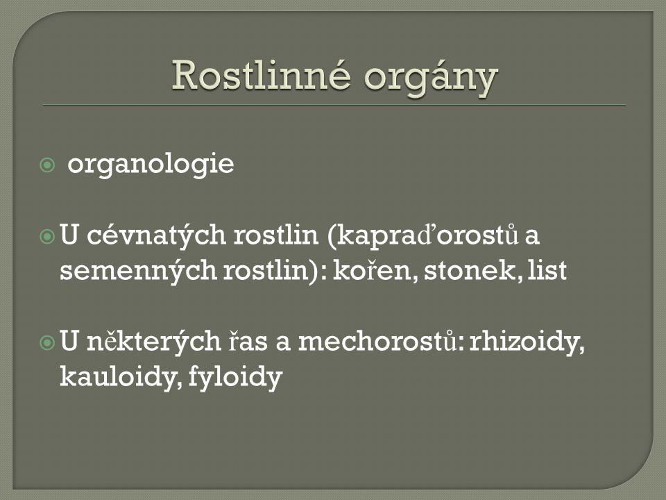 Rostlinné orgány organologie