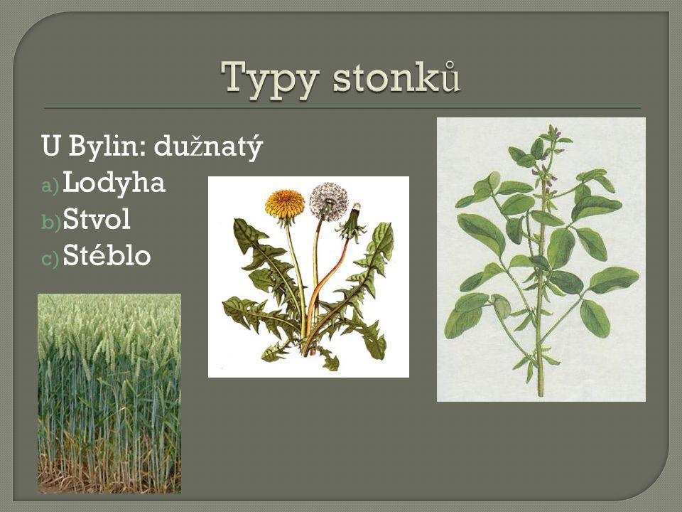 Typy stonků U Bylin: dužnatý Lodyha Stvol Stéblo