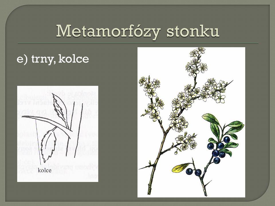 Metamorfózy stonku e) trny, kolce