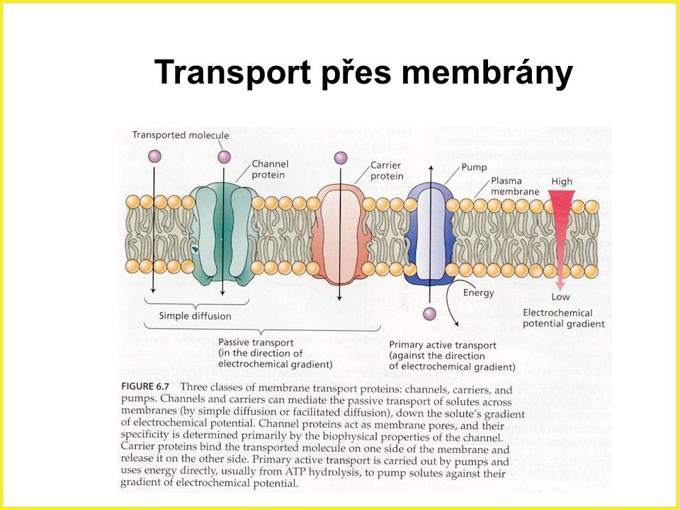 Transport přes membrány