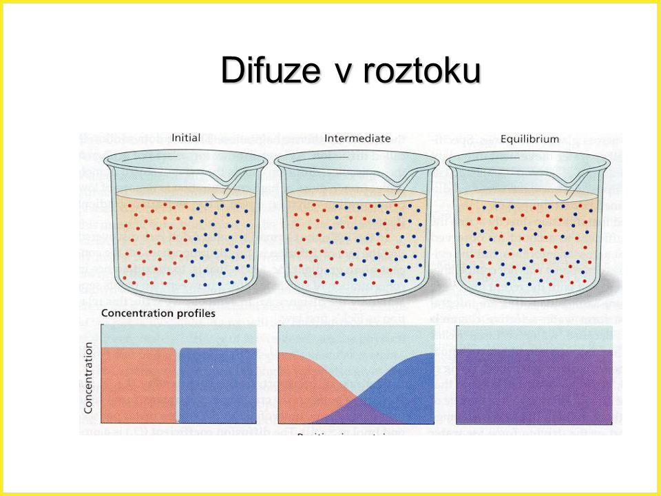 Difuze v roztoku Difuze, roztok, 13