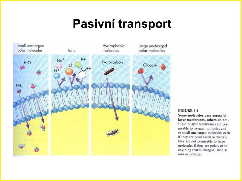 Pasivní transport Pasivní transport, ionty, polární molekuly, cukr, 18