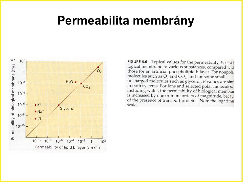 Permeabilita membrány