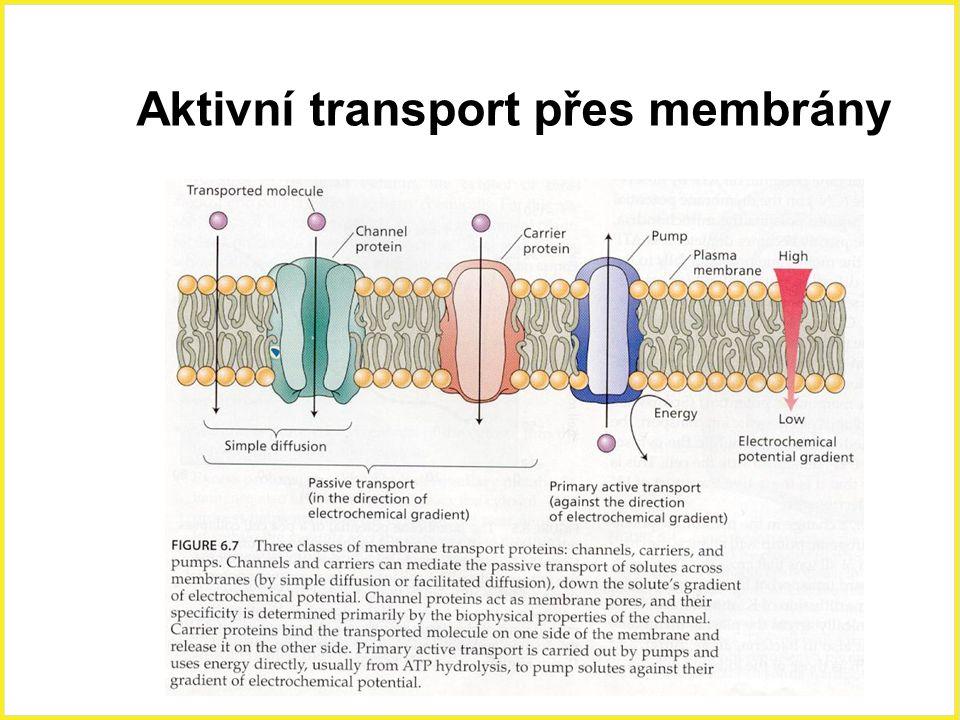 Aktivní transport přes membrány