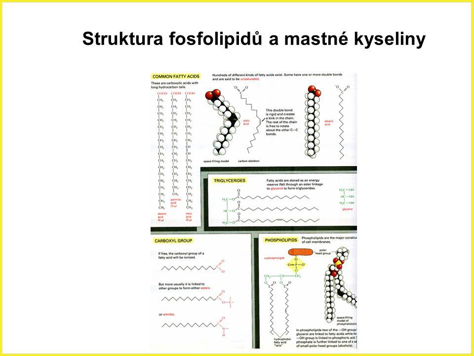 Struktura fosfolipidů a mastné kyseliny