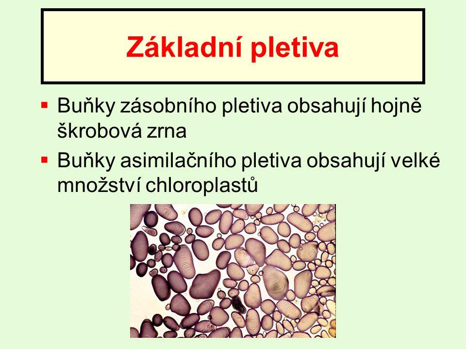 Základní pletiva Buňky zásobního pletiva obsahují hojně škrobová zrna