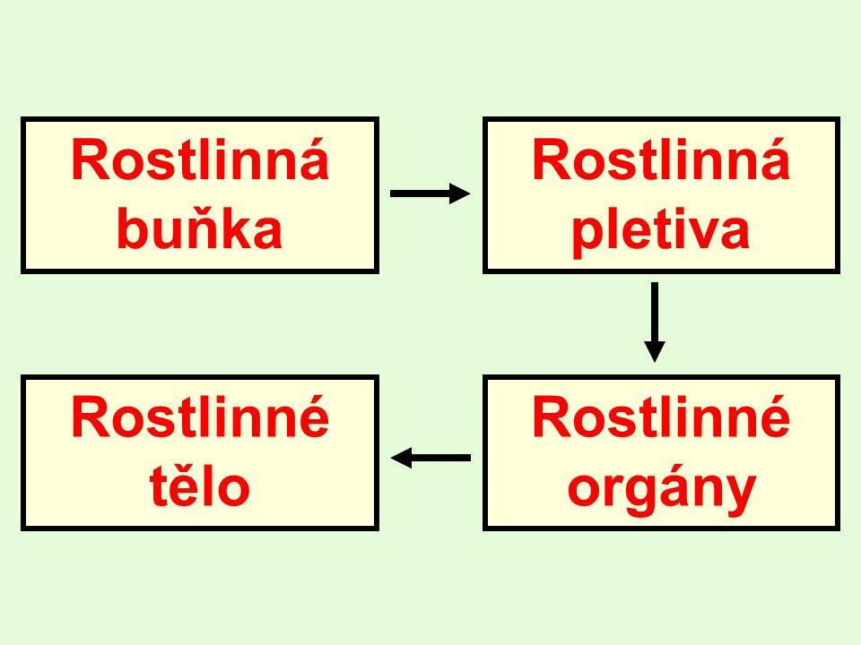 Rostlinná buňka Rostlinná pletiva Rostlinné tělo Rostlinné orgány