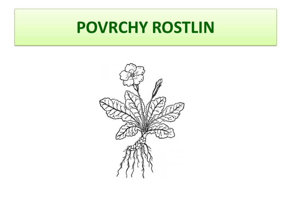 POVRCHY ROSTLIN