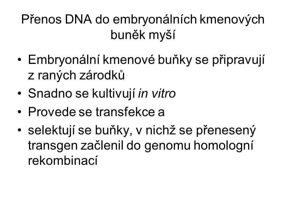 Přenos DNA do embryonálních kmenových buněk myší