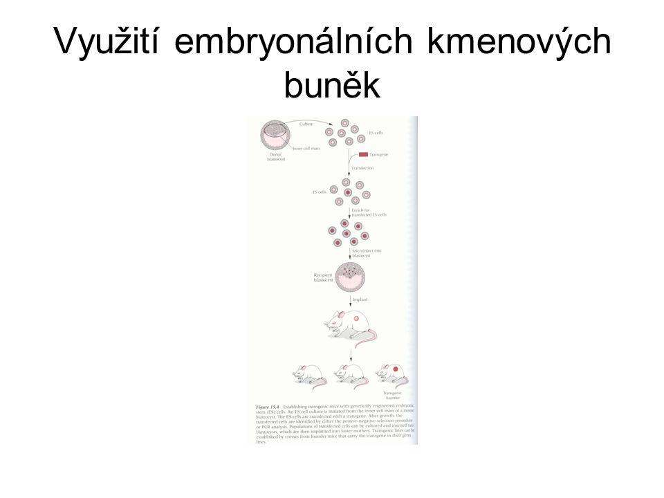Využití embryonálních kmenových buněk