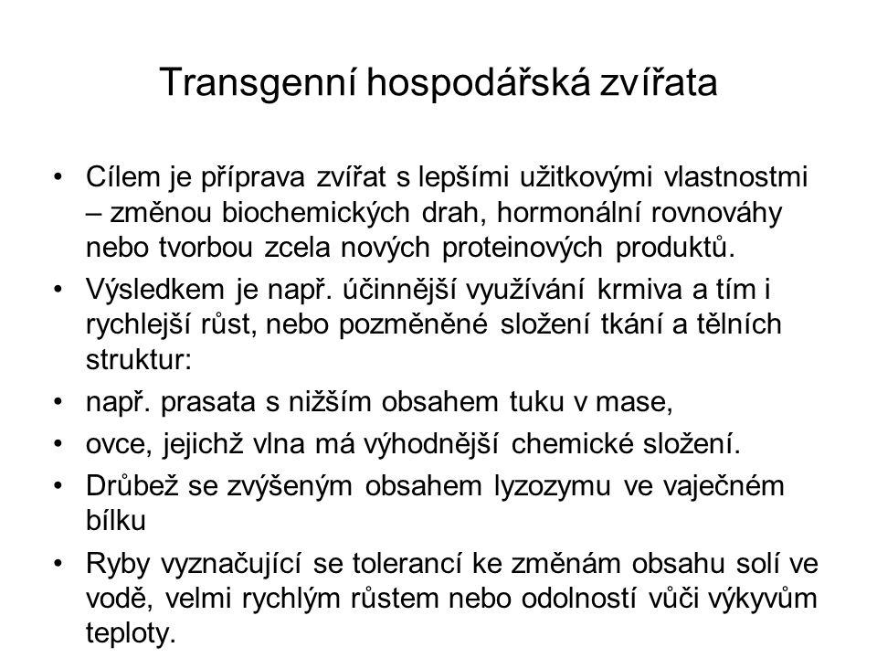 Transgenní hospodářská zvířata