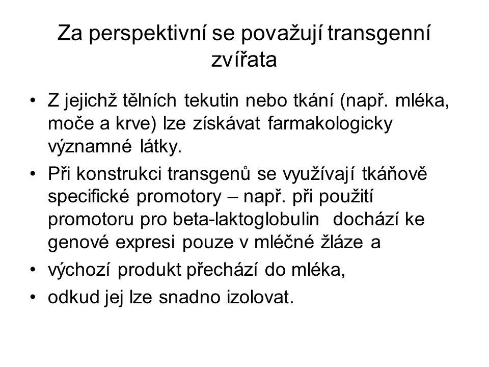 Za perspektivní se považují transgenní zvířata