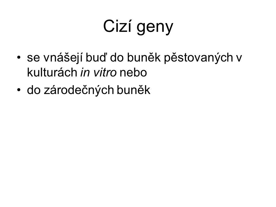Cizí geny se vnášejí buď do buněk pěstovaných v kulturách in vitro nebo do zárodečných buněk