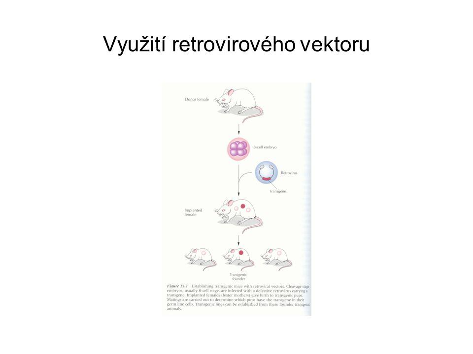 Využití retrovirového vektoru