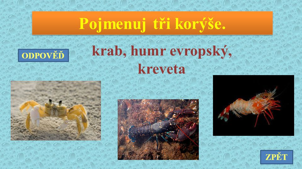 krab, humr evropský, kreveta