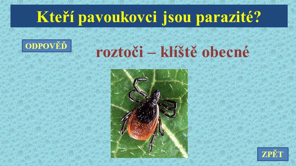 Kteří pavoukovci jsou parazité roztoči – klíště obecné