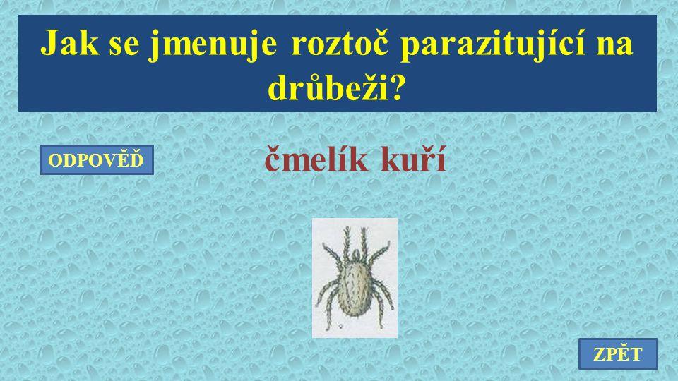 Jak se jmenuje roztoč parazitující na drůbeži