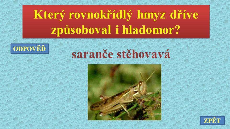 Který rovnokřídlý hmyz dříve způsoboval i hladomor