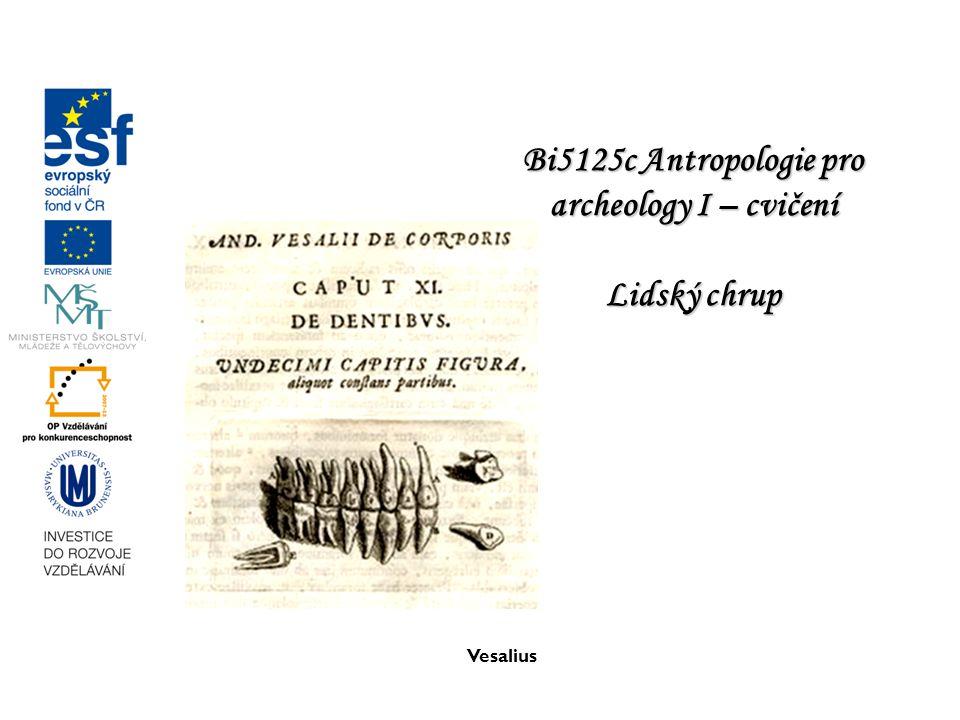 Bi5125c Antropologie pro archeology I – cvičení