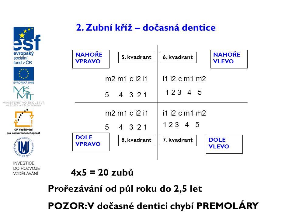 2. Zubní kříž – dočasná dentice