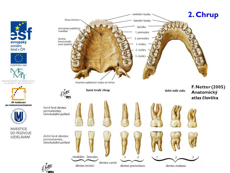 2. Chrup F. Netter (2005) Anatomický atlas člověka