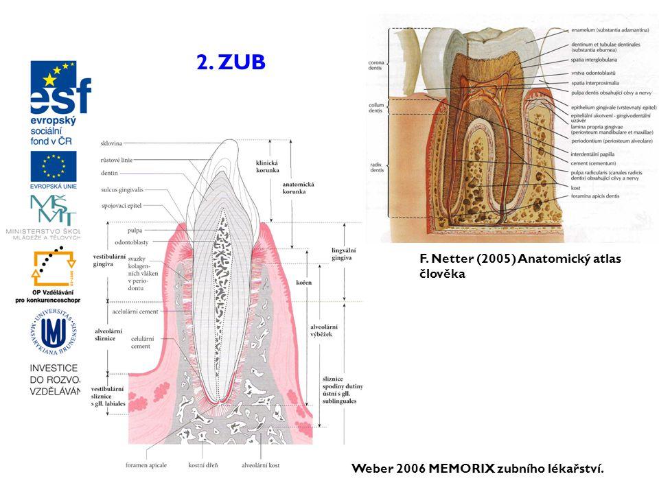 2. ZUB F. Netter (2005) Anatomický atlas člověka