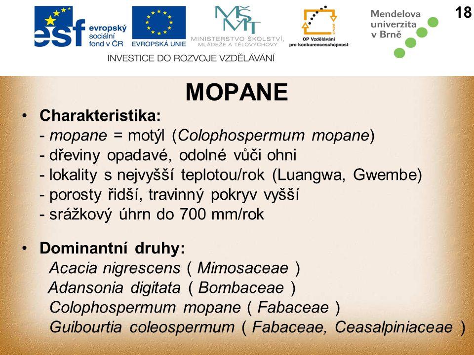 MOPANE Charakteristika: - mopane = motýl (Colophospermum mopane)