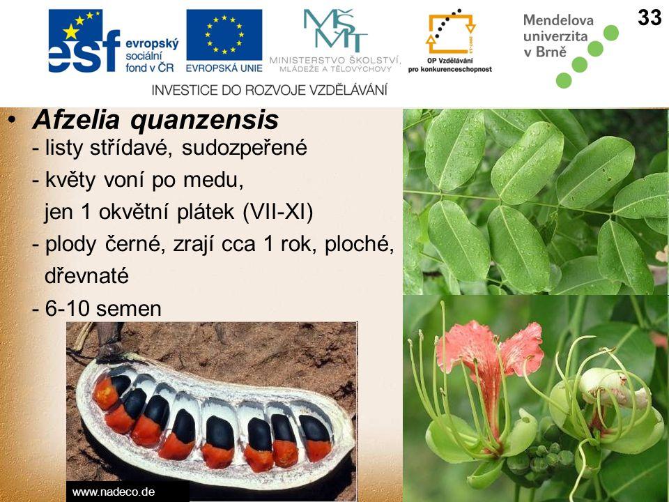 Afzelia quanzensis 33 - listy střídavé, sudozpeřené