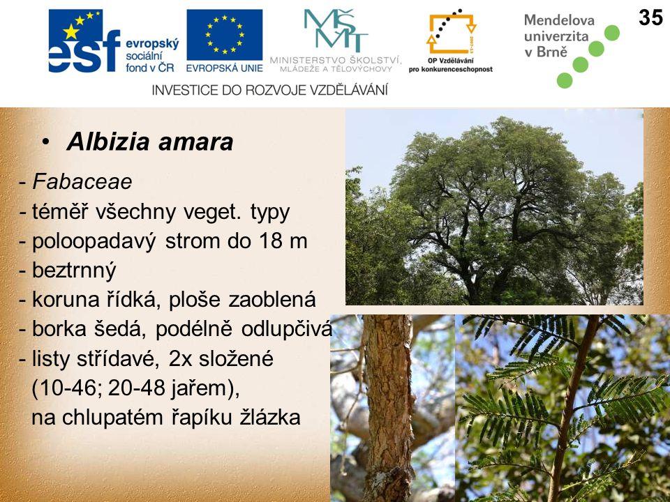 Albizia amara 35 - Fabaceae - téměř všechny veget. typy