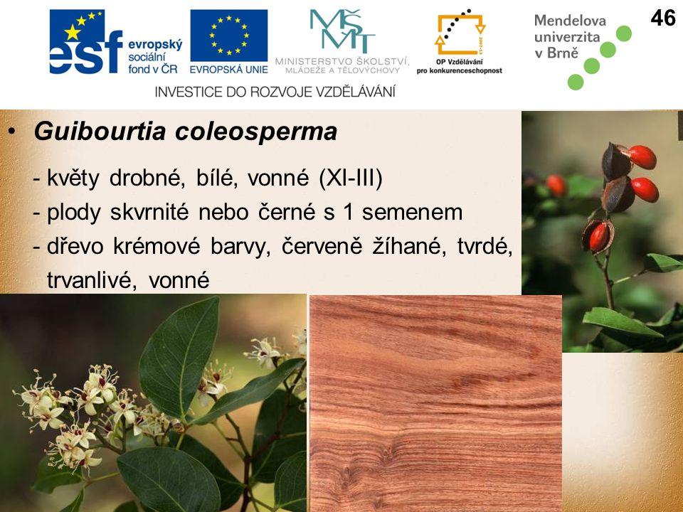 Guibourtia coleosperma