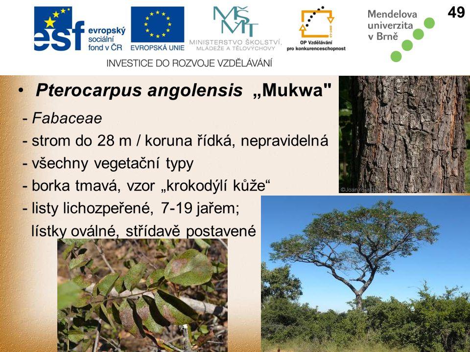 """Pterocarpus angolensis """"Mukwa"""