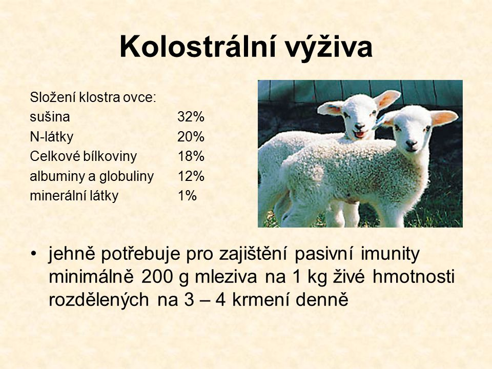 Kolostrální výživa Složení klostra ovce: sušina 32% N-látky 20% Celkové bílkoviny 18% albuminy a globuliny 12%