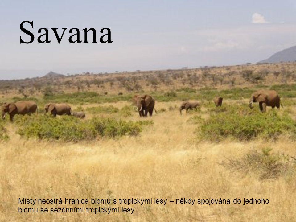 Savana Místy neostrá hranice biomu s tropickými lesy – někdy spojována do jednoho biomu se sezónními tropickými lesy.