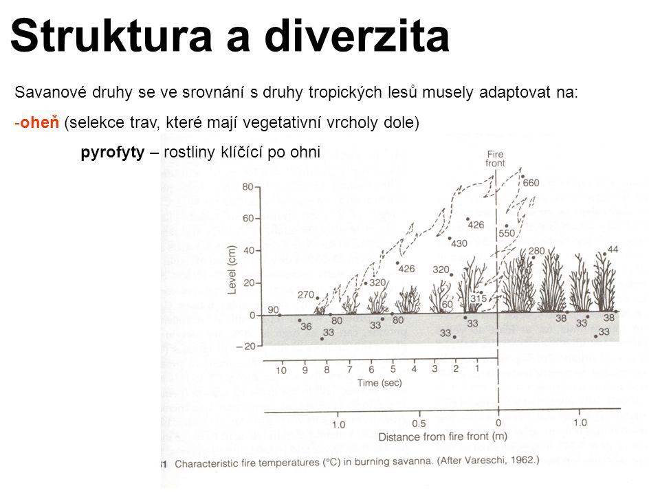 Struktura a diverzita Savanové druhy se ve srovnání s druhy tropických lesů musely adaptovat na: