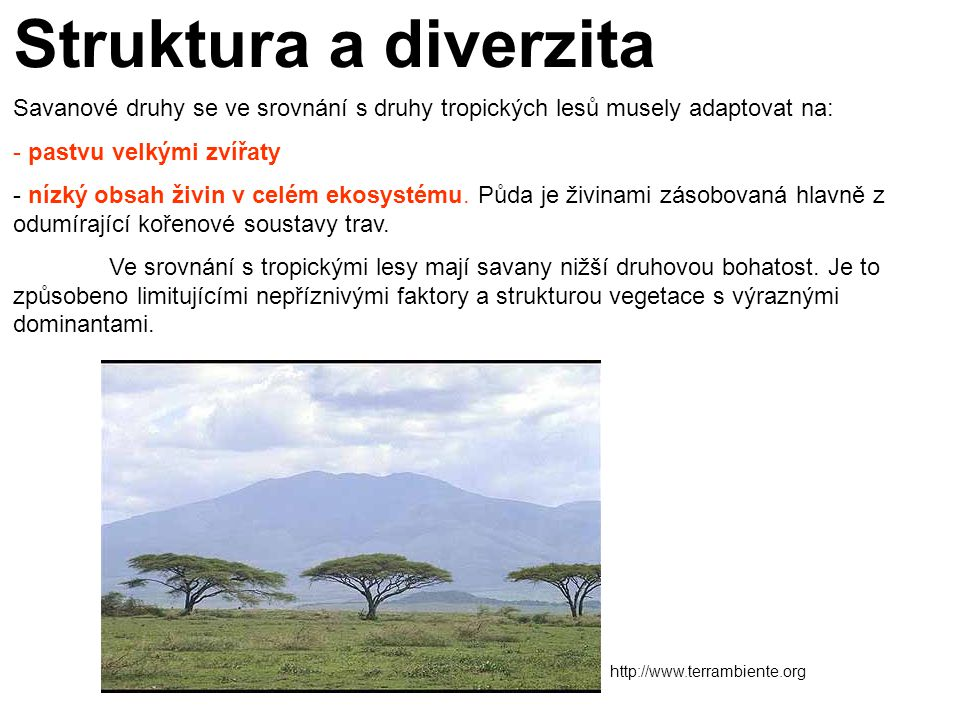 Struktura a diverzita Savanové druhy se ve srovnání s druhy tropických lesů musely adaptovat na: pastvu velkými zvířaty.
