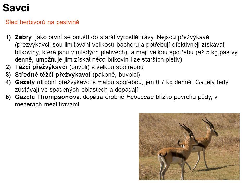 Savci Sled herbivorů na pastvině