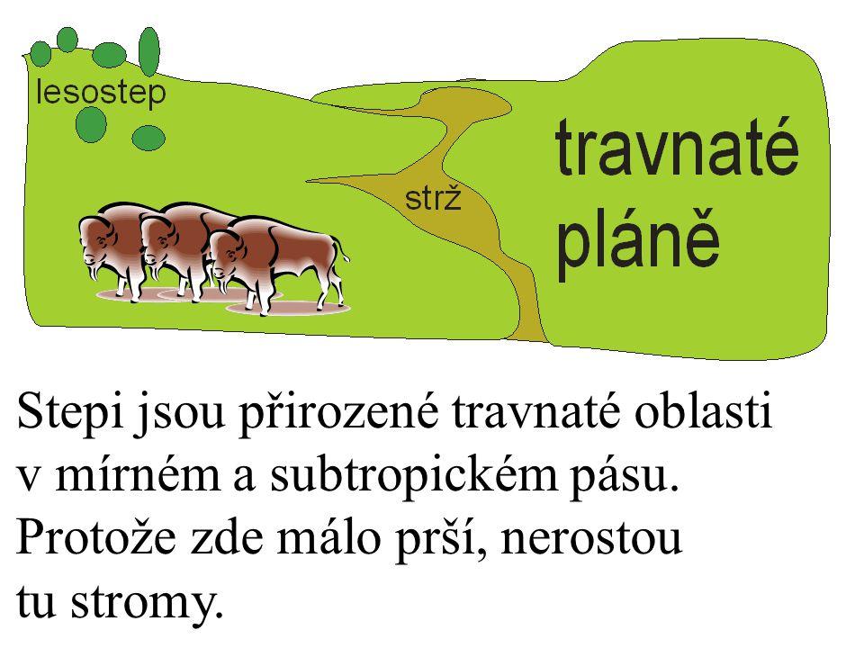 Stepi jsou přirozené travnaté oblasti