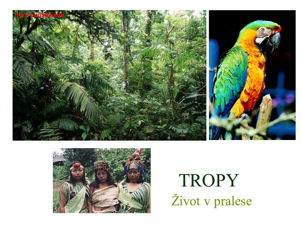 TROPY Život v pralese