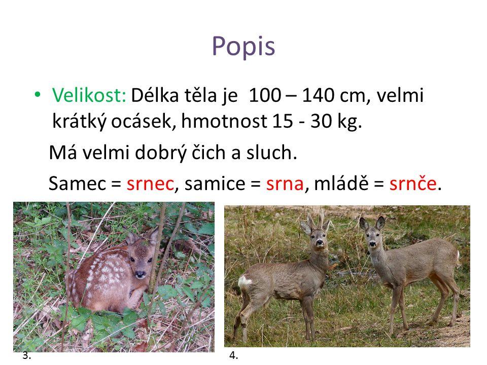 Popis Velikost: Délka těla je 100 – 140 cm, velmi krátký ocásek, hmotnost 15 - 30 kg. Má velmi dobrý čich a sluch.