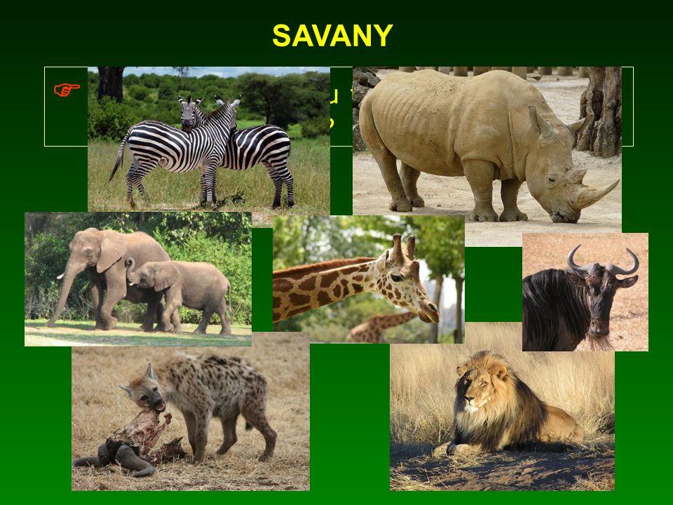  Jaká zvířata jsou typickými obyvateli afrických savan
