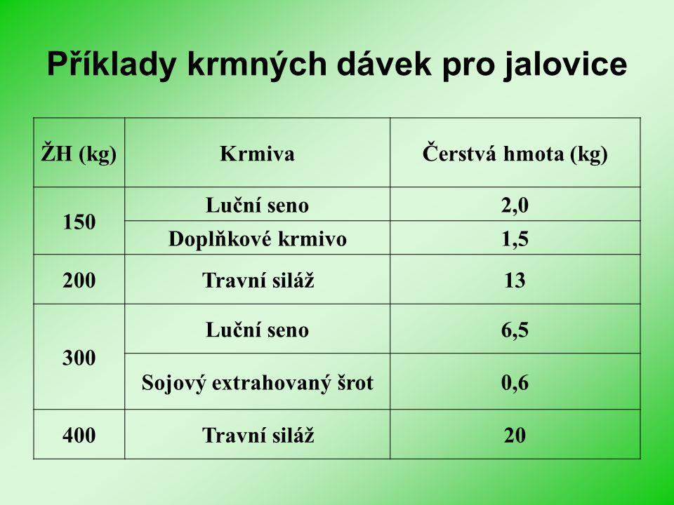 Příklady krmných dávek pro jalovice