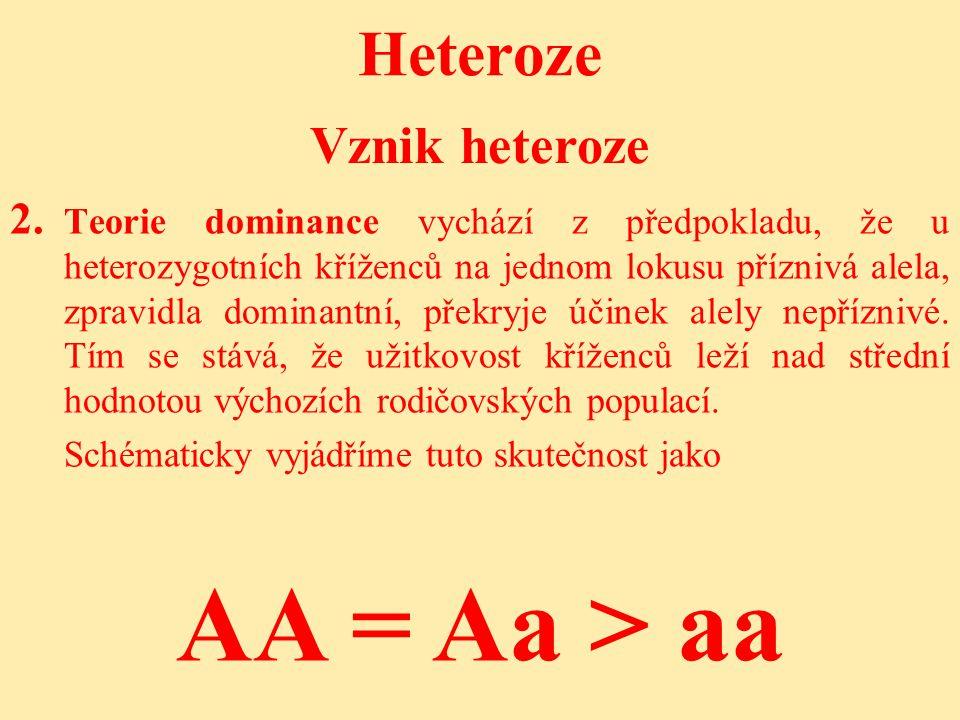 AA = Aa > aa Heteroze Vznik heteroze