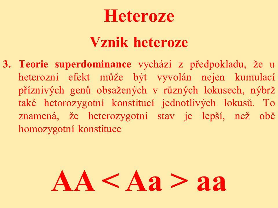 AA < Aa > aa Heteroze Vznik heteroze