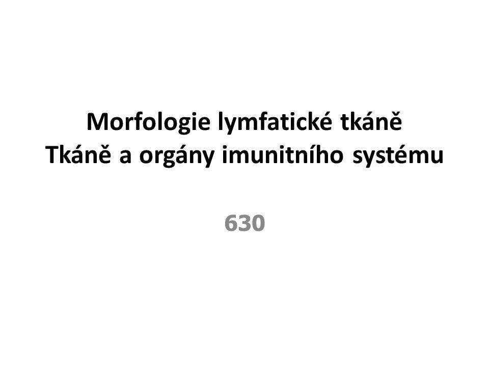 Morfologie lymfatické tkáně Tkáně a orgány imunitního systému