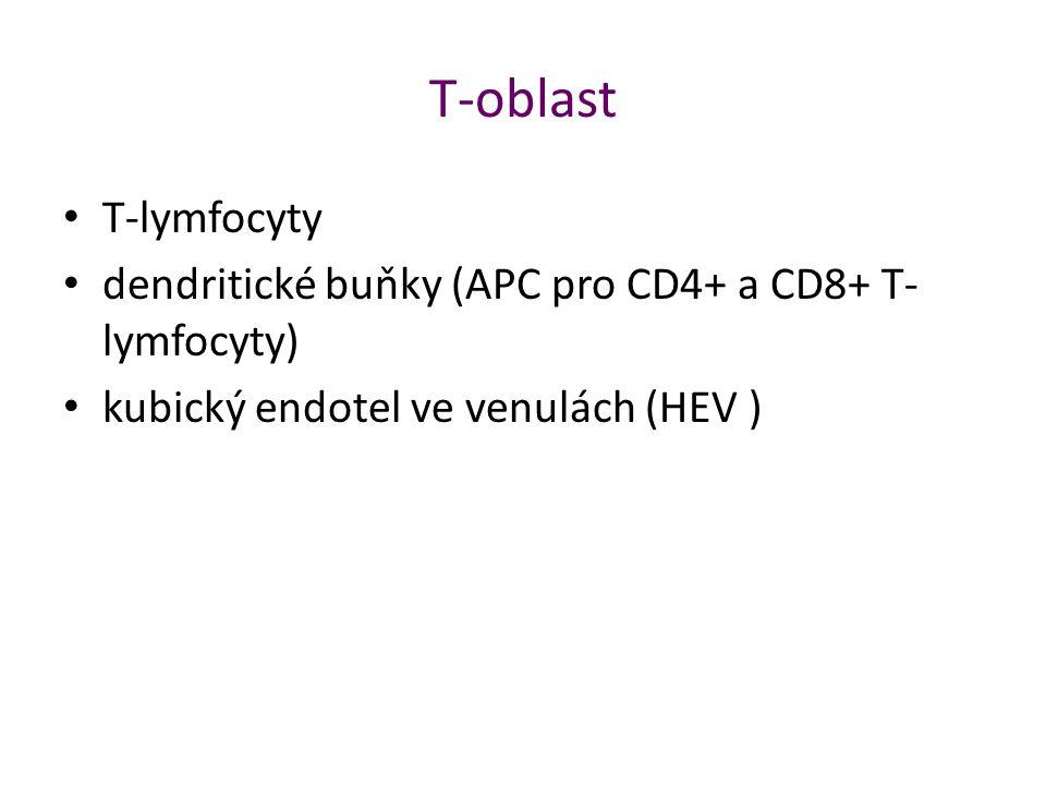 T-oblast T-lymfocyty.