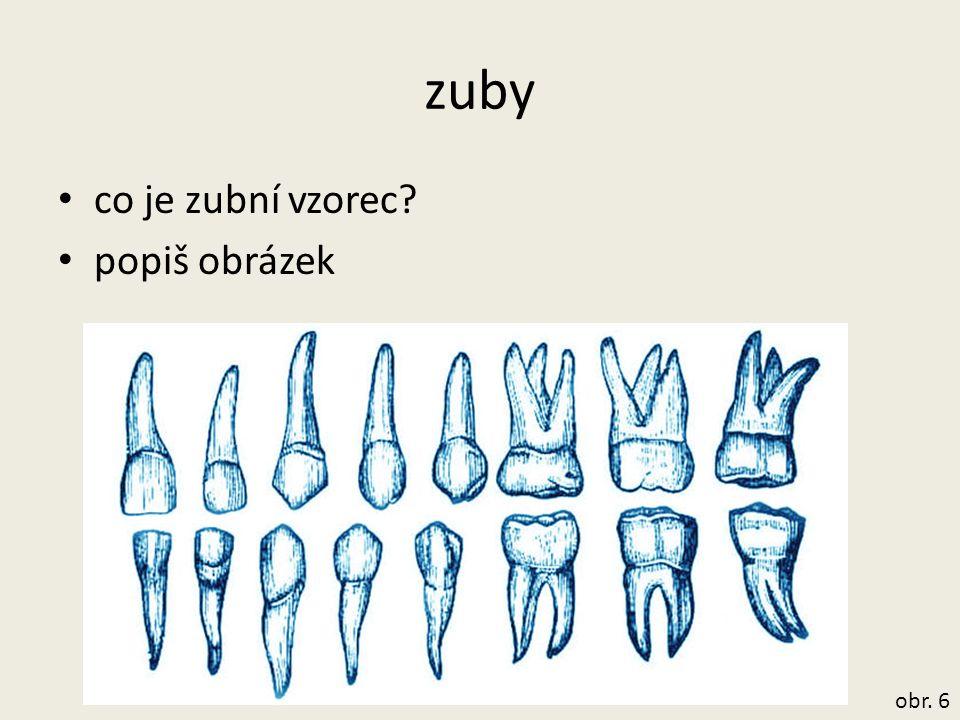 zuby co je zubní vzorec popiš obrázek obr. 6