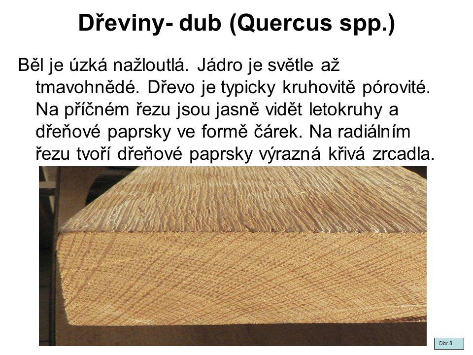 Dřeviny- dub (Quercus spp.)
